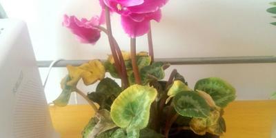 Помогите определить название растения. Какой необходим уход, чтобы цветок не погиб?
