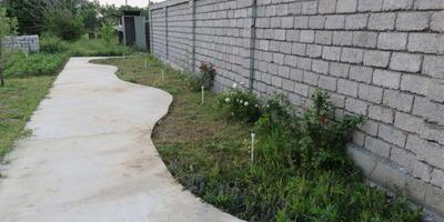 Помогите выбрать растения для цветника вдоль забора
