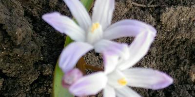 Подскажите название цветка