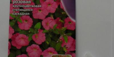 Петуния Марко Поло F1 розовая. I этап. Посев семян
