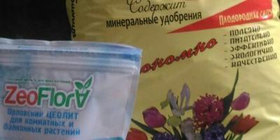 Петуния Василиса Премудрая F1. I этап. Посев (часть 2)