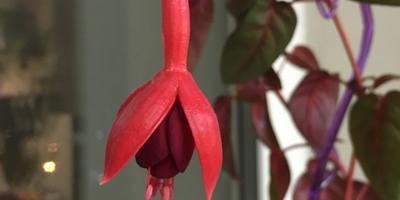 Помогите найти название этого цветка!