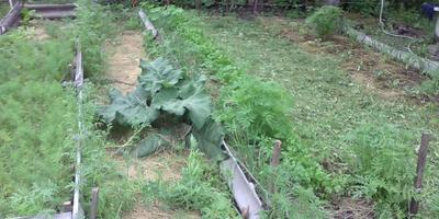 Первые подкормки растений на огороде. Май-июнь месяц