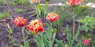 Наконец-то весна пришла