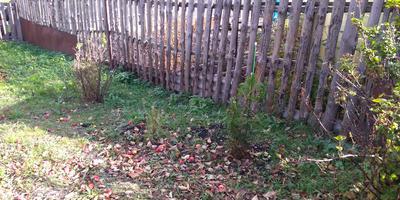 Какие кустарники или деревья посадить вдоль забора с соседским участком?