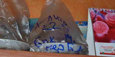 Перец сладкий Биг Мама (Аэлита). Тест на всхожесть