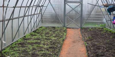 Не будет ли соседство с арбузами и дынями в теплице вредным для огурцов?