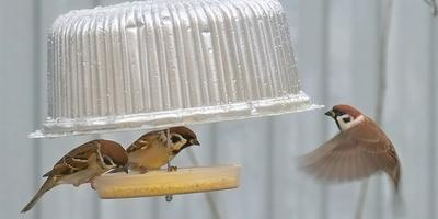 Поделка из бросового материала. Кормушка для птиц