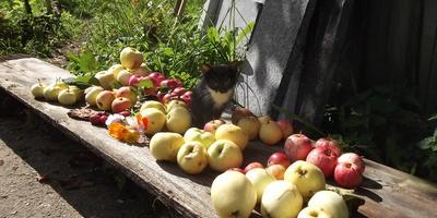 Сорта яблонь в нашем саду