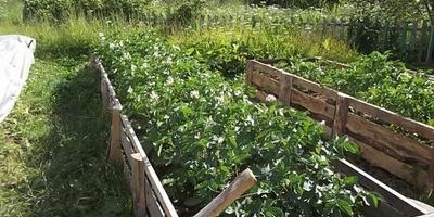 Огородный Каркассон: собери свою грядку