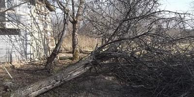 Как мы спилили дерево