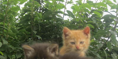 Как вылечить лишай у маленьких котят?