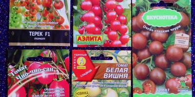 Ревизия семян томатов: как это было...