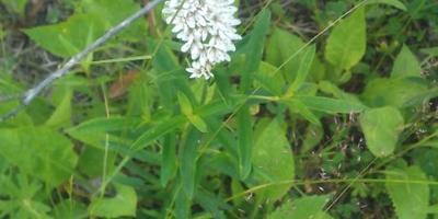 Помогите определить название растений