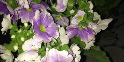 Пожалуйста, подскажите названия цветов