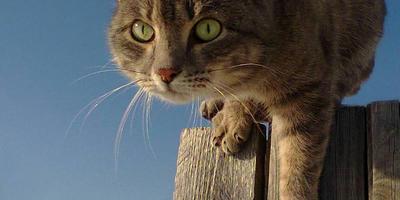 Если к вашему дому прибился котенок, то это счастливая примета