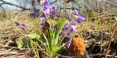 Весенние грибочки, которые можно найти в наших лесах