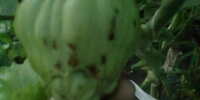 Подскажите, пожалуйста, в чем причина деформации плодов?