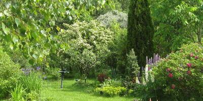 Приглашаю прогуляться по моему любимому садику посмотреть цветы