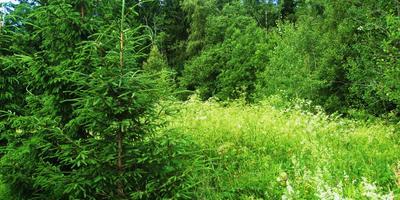Приглашаю на прогулку по лесу и увидеть, чем радует наш лес