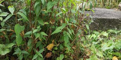 Грибы с грядки — можно в лес не ходить