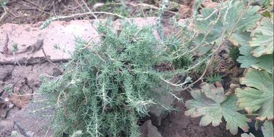 Помогите определить растение. Как за ним ухаживать?