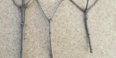 Волшебные палочки, или Подпорки под растения из обрезков веток