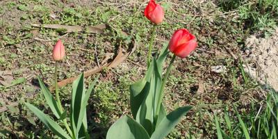 Цветы и цветнички