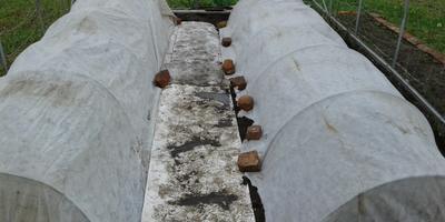 Огородные эксперименты