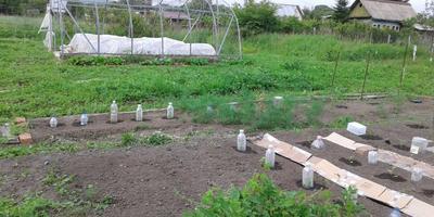 Огородные эксперименты-3