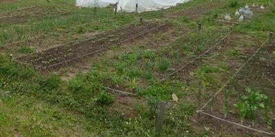 Домашнее задание №2: как мы организовали огород на своем участке
