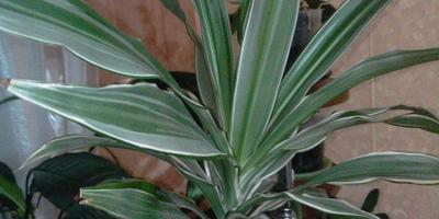 Скажите, пожалуйста, что это за растение?