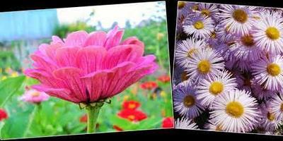 К юбилею Семидачья - наш цветочный хоровод!