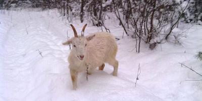 Зимняя прогулка с четвероногими друзьями и мысли во время нее