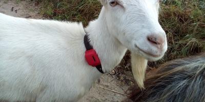 Подробнее о поиске животных с помощью GPS