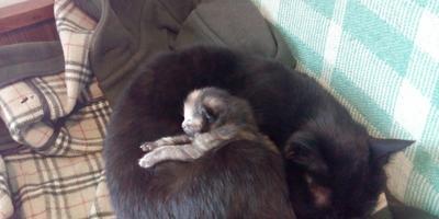 Козы и кошки в июне
