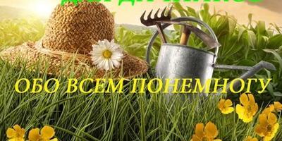 Обзор семян на рассаду. Часть 2