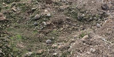 Позеленела земля в теплице. Что делать?