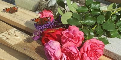 О моем саде-огороде
