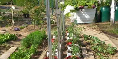 Мой сад-огород (продолжение)