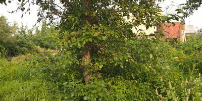 Помогите с планированием грядок на 4 сотках в старом саду