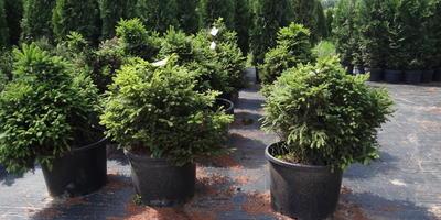 Летние посадки растений