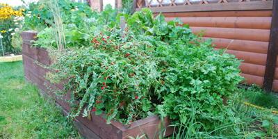 Домашняя работа №2: маленький огород – большой урожай