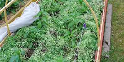 Домашняя работа №4: плодосмен, совмещённые посевы и уплотнённые культуры – какие для них возможности на маленьком огороде