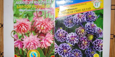 Поделитесь опытом выращивания аквилегии из семян