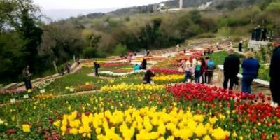 Парад тюльпанов-2016: Никитский ботанический сад