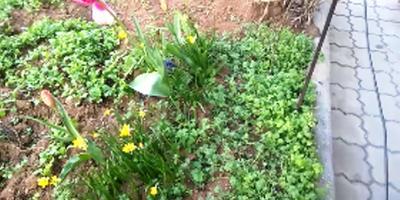 Как определить кислотность почвы. Органическое земледелие