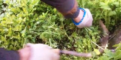 Готовим грядку весной на юге. Органическое земледелие