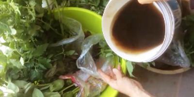 Как сажать помидоры в открытый грунт на юге