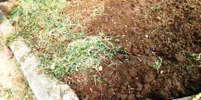 Сидераты осенью/Как улучшить почву - часть 1